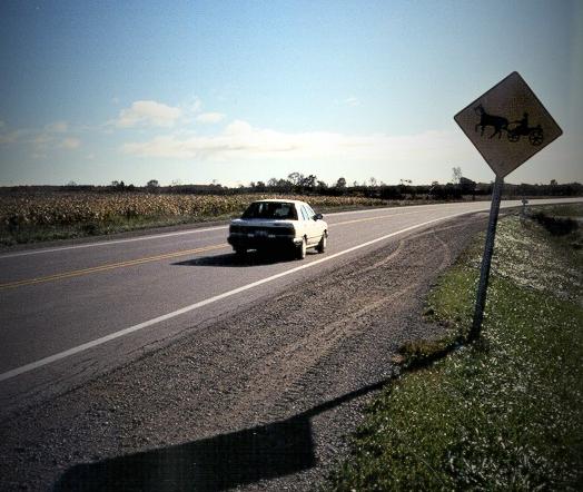 Horse ahead